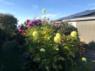 Garden (self watering)