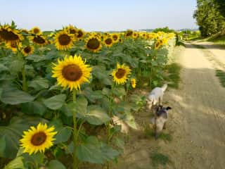 Summertime pet sitting in the South of France