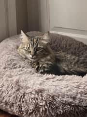 Karma, 2 year kitty