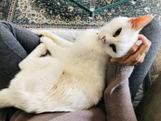 Loveable Yoda loves being on my lap! Petsitting in Ashland, Oregon 2019