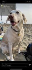 Cali at the beach!