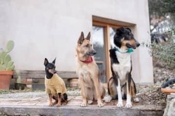 Kaaos, Kaino and Corto  [foto Minna]