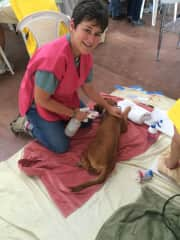 Susan at Spay Neuter clinic working recovery.