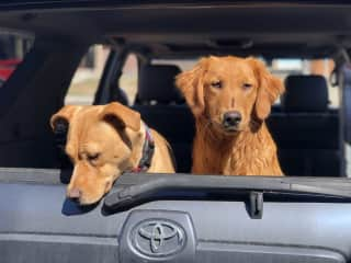 Marley and Teddy are always up for a car ride or adventure!