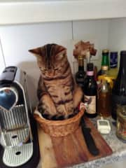"""""""Well, technically, I'm not sitting on the kitchen counter"""""""
