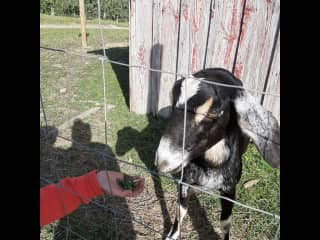 I absolutely LOVE goats! Farm adventures here I come...