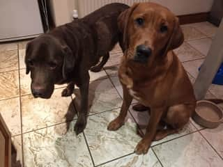 Bodhi & Flint in the kitchen waiting for dinner
