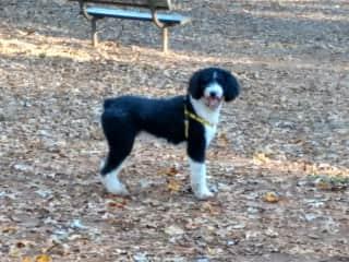 Otis  at the park