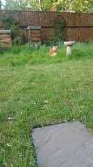 Humphrey and 2 bee hives