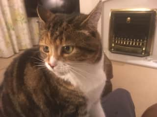 One of twoCats that I wasLooking afterIn Heathfield in December 2018, both are gorgeous Sister's was also looking after a tankOf TropicalFish.