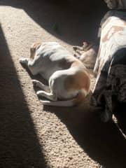 Kiki and Arthur soaking up afternoon sunshine