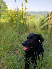 Our beautiul Maia, the happiest dog ever, especially when you take her for a walk