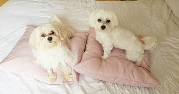 Bella and Teddy