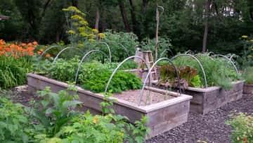 Denis' vegetable garden