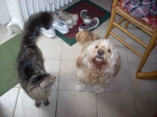 Chester and Scruffy