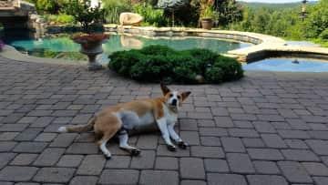 Moto - pet sitting in Toccoa, Ga.