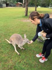 Making friends with Roos in Australia