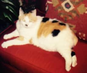 My late cat, Bobsy