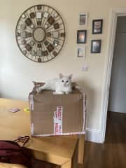 Ziggy loves sitting / snoozing on a box, this one in the kitchen