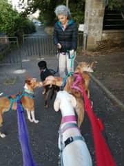Walking 5 dogs!