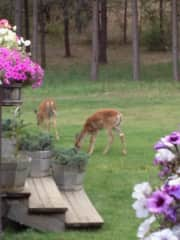 Enjoying visitors to our backyard - on 5 acres