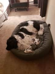 Dozer in his bed