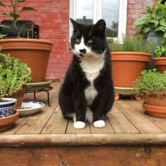 On garden watch