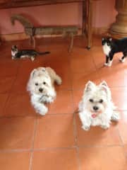 Zola, Zack, and the kitties in San Miguel de Allende Mexico. Many dates pre 2017.