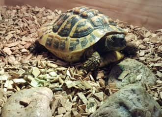 Totty the tortoise who  was my friend for two weeks.