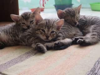 Latest kittens we raised