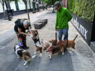 """Marci, the basset hound magnet! Totally unable to just """"walk on by,"""" in Mexico City, without saying """"buenos Dias!"""""""