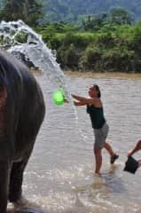 Elephant conservation Thailand