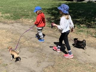 Our grandkids help walk the chihuahuas :)