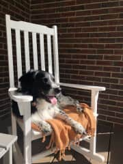 Cole sunbathing on the front porch