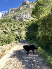 Kipu on his walk Denia, Spain.