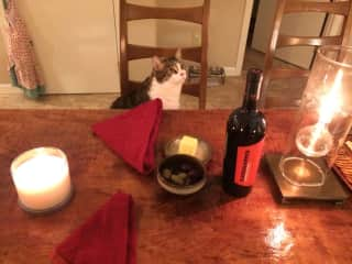 Our own sweet Theodor, who likes to sit at the table with us at mealtimes!