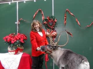 Bonnie Reindeer ready for the holidays