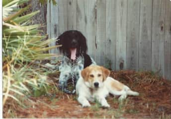 Our previous dogs Wad and Savanah, who have passed now