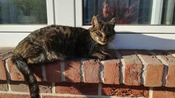 Winnie sunbathes on the windowsill.