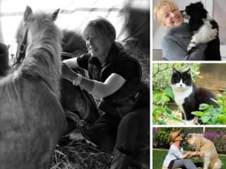 Animal Love, Hope Spain, Gracie, New York, Zorro Suffolk, Alfie , San Diego, CA