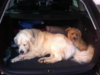 We'll drive for a walk on the beach - Max and Jesco