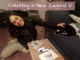Catsitting in NZ