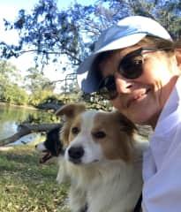 3 months with 2 border collies, NSW Australia. 2018