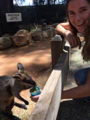 Ella feeding a pademelon at Featherdale Wildlife Park