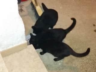 The cats in Sperlonga house, November 2015