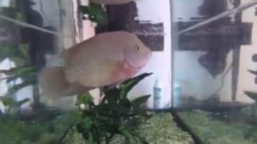 Deli, my son's pet fish