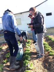 Enjoying the harvest at school