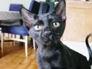 Louie (as a kitten)