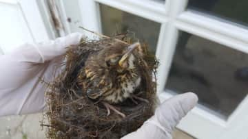 We care about animals.  We rescued small birds fell off from tree couple times and release them when they are strong enough to fly away.