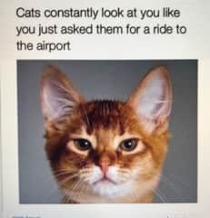 I can provide rides to the airport too!
